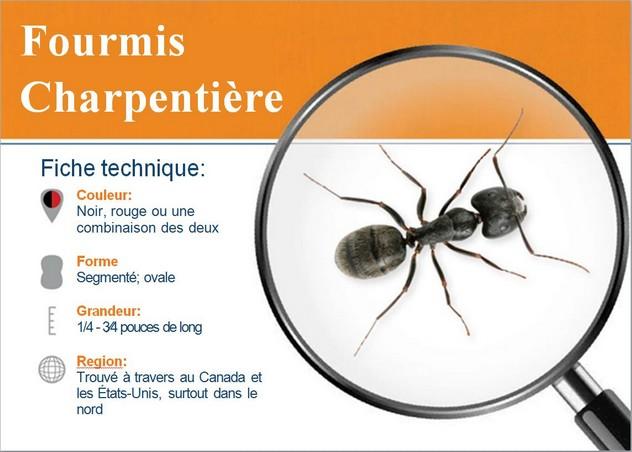Fiche fourmis charpentiere