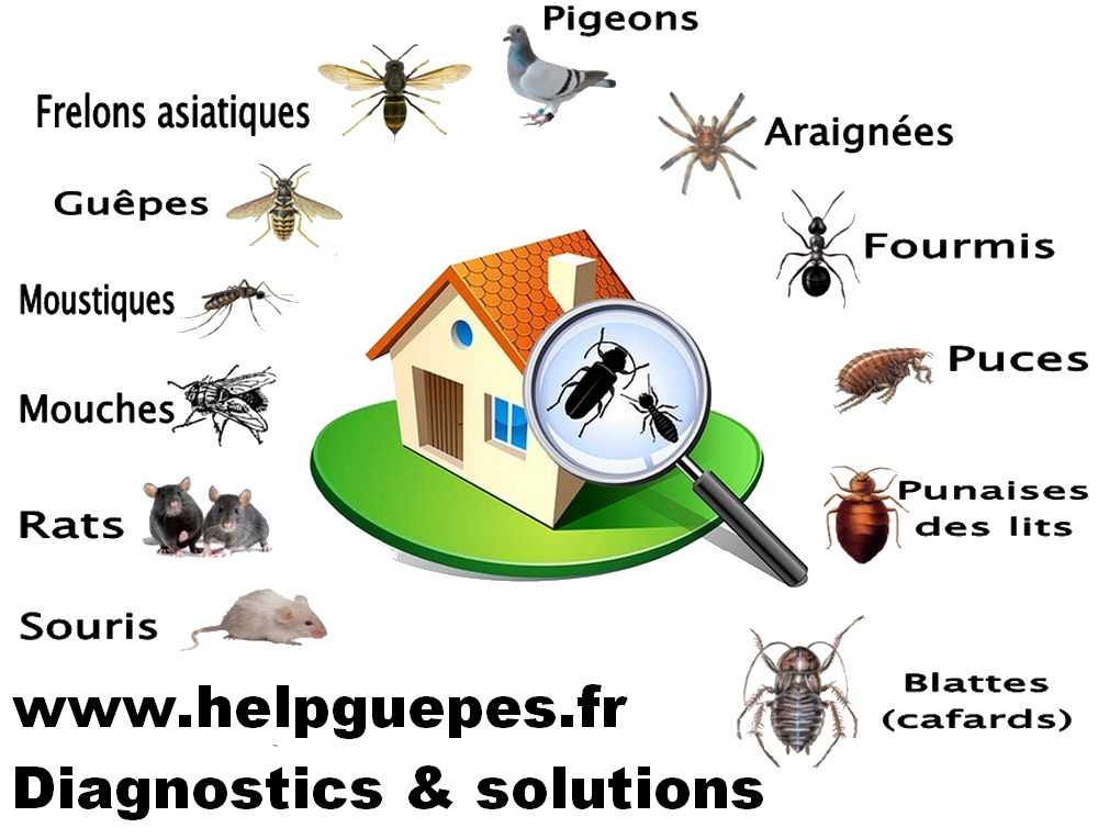 Help guepes mougins