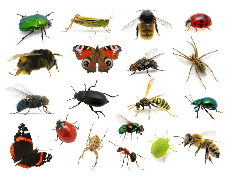 Les insectes du jardin help guepes